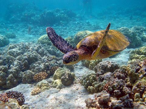 tortuga-marina.jpg
